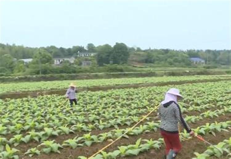 宁乡:简易追肥打药机 助烟农减工降本