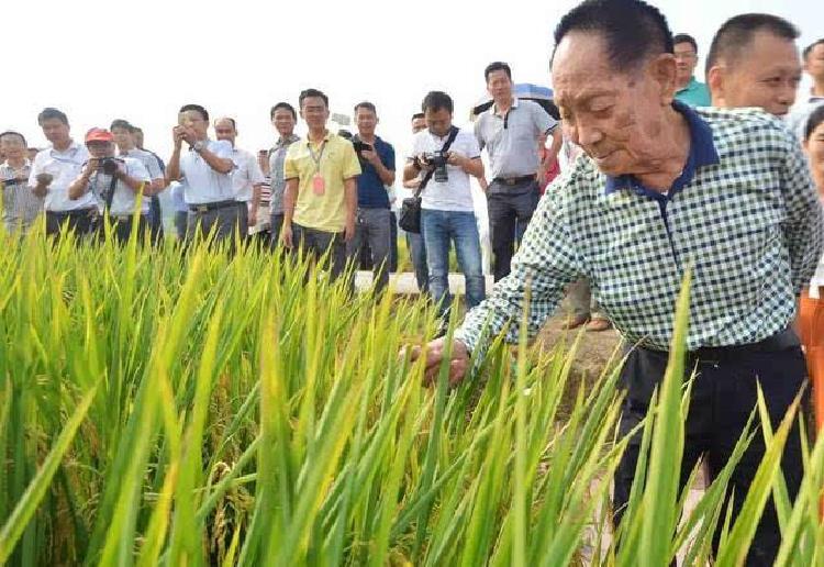 袁隆平联手央企加大非洲杂交水稻推广 未来五年计划种植百万公顷